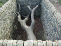 andy-goldsworthy-tree-with-stones-around-it-png